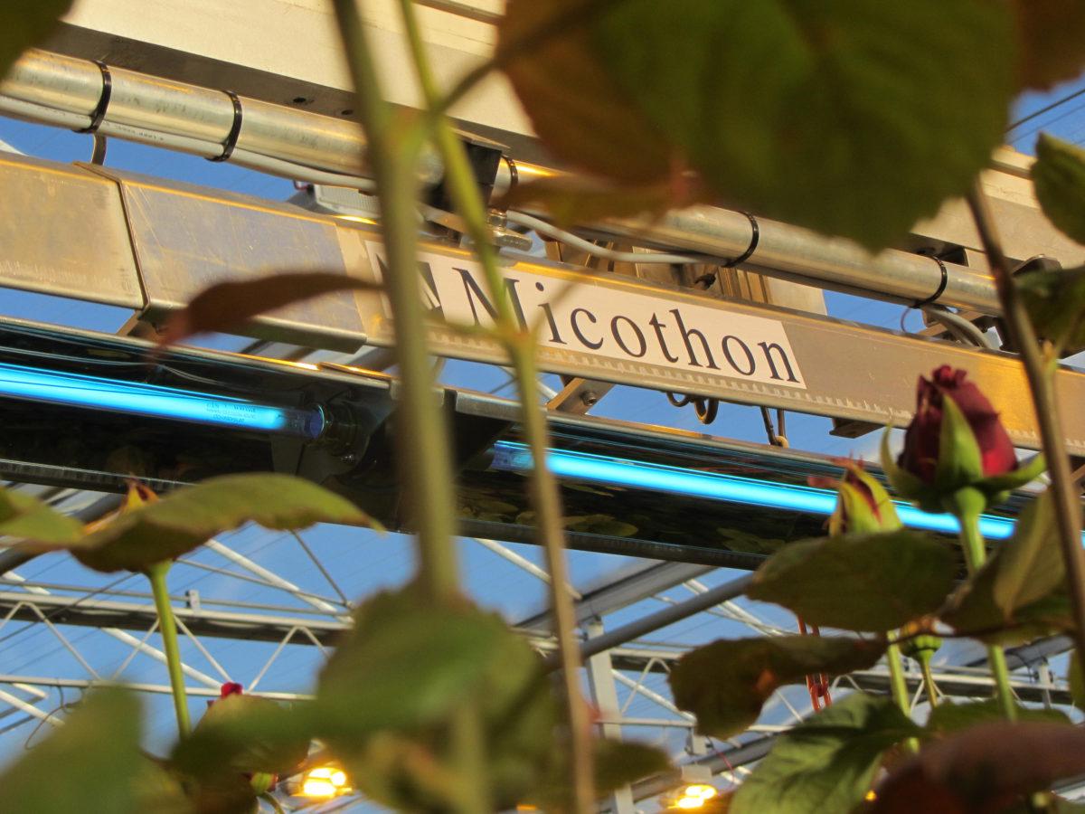 Micothon UV C Greenhouse crop protection