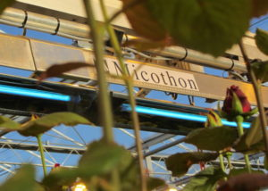 Micothon UV C Greenhouse crop protection