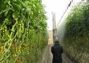 Micothon Mira spraying robot in Tomatoes