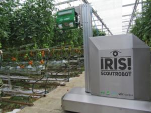 IRIS! Scoutrobot scouting Tomatoes