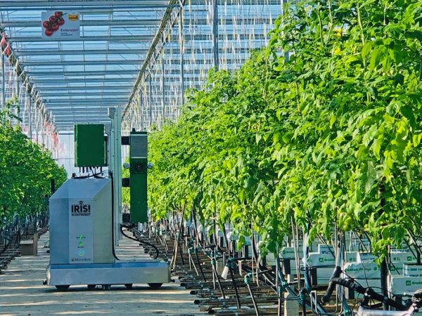 Automatic Scouting at Stijger Greenhouse